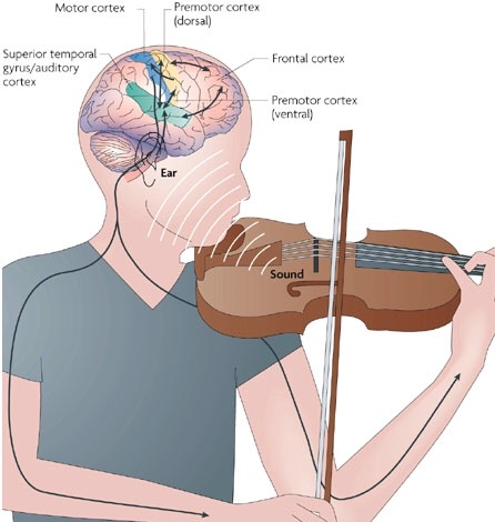 """how music effects brain development It provides a total brain workout"""" research has shown that listening to music can reduce anxiety, blood pressure, and pain as well as improve sleep quality, mood, mental alertness, and memory the brain-music connection experts are trying to understand how our brains can hear and play music."""